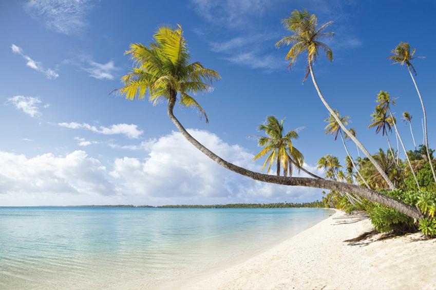 Professionnel pour déménagement vers les Antilles (Guadeloupe, Martinique, Saint-Martin)